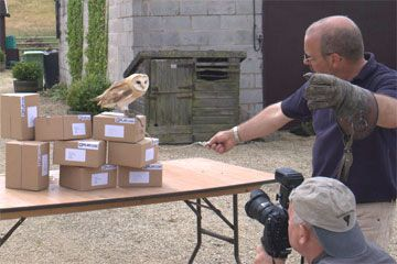 Filming an Owl